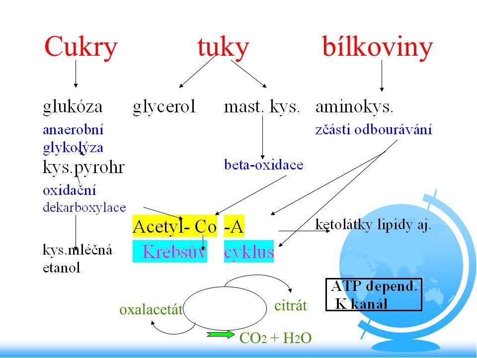 Cukry tuky bílkoviny citrát oxalacetát CO2 + H2O