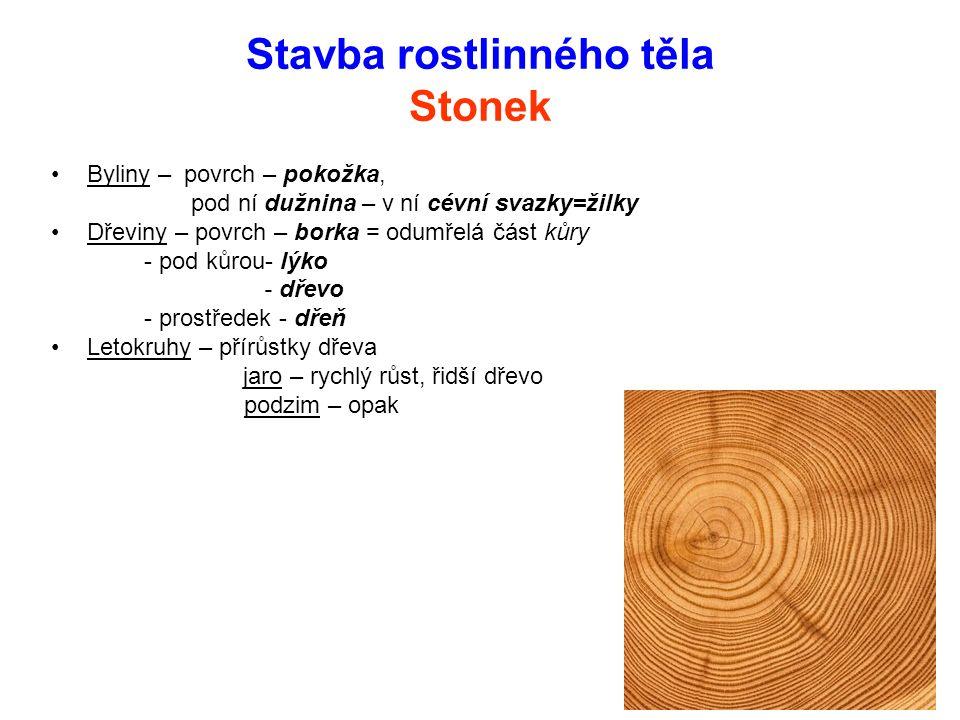 Stavba rostlinného těla Stonek