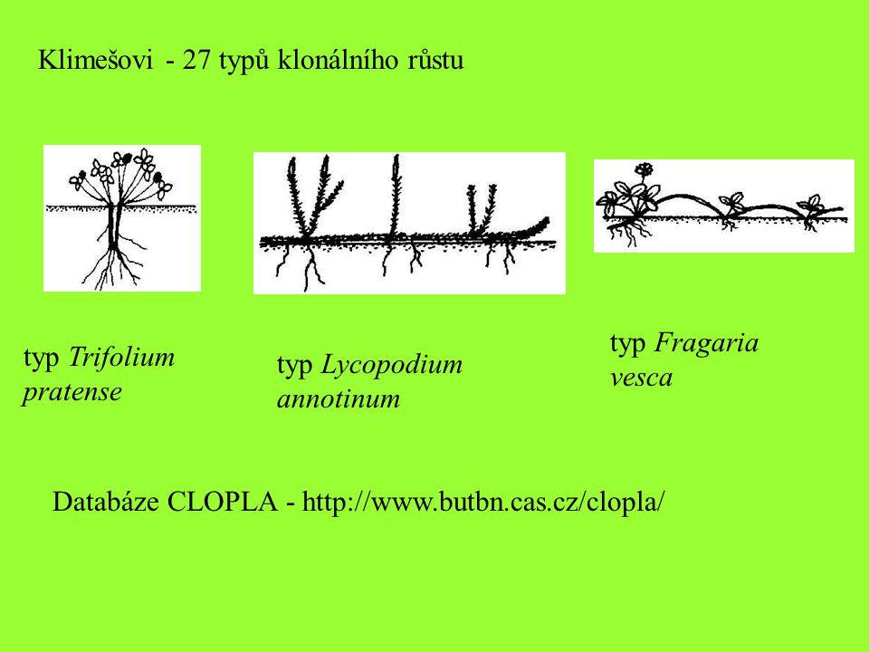 Klimešovi - 27 typů klonálního růstu