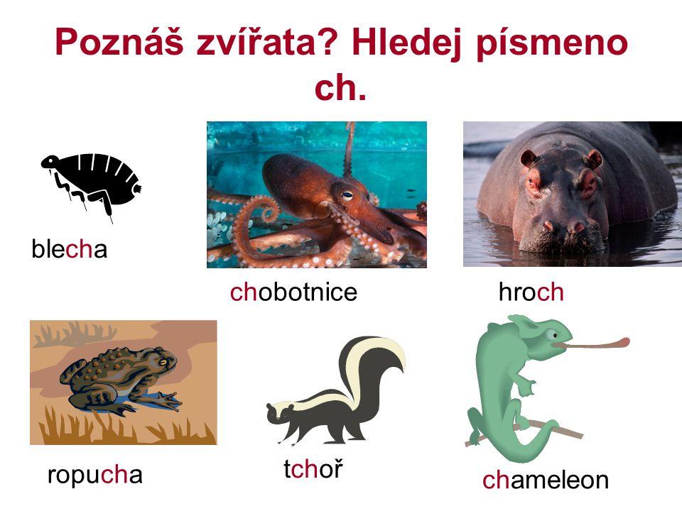 Poznáš zvířata Hledej písmeno ch.