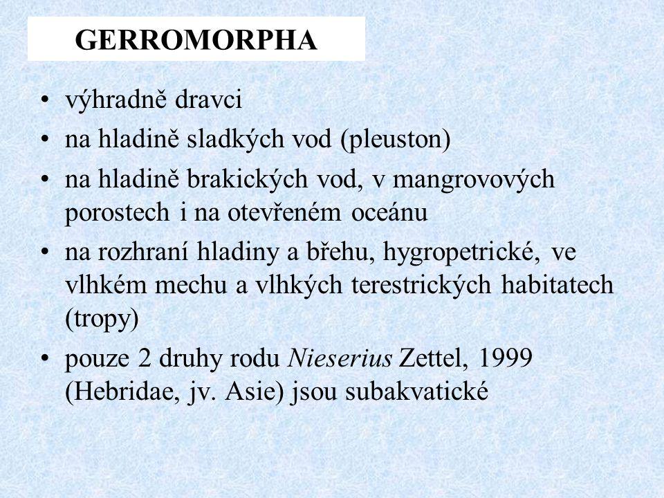 GERROMORPHA výhradně dravci na hladině sladkých vod (pleuston)