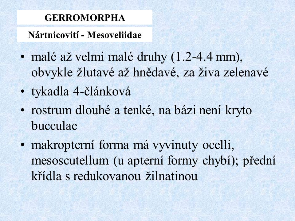 Nártnicovití - Mesoveliidae