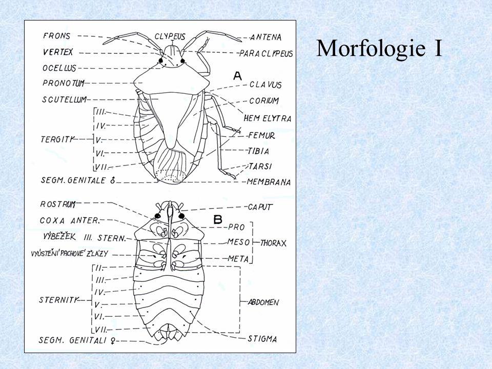 Morfologie I