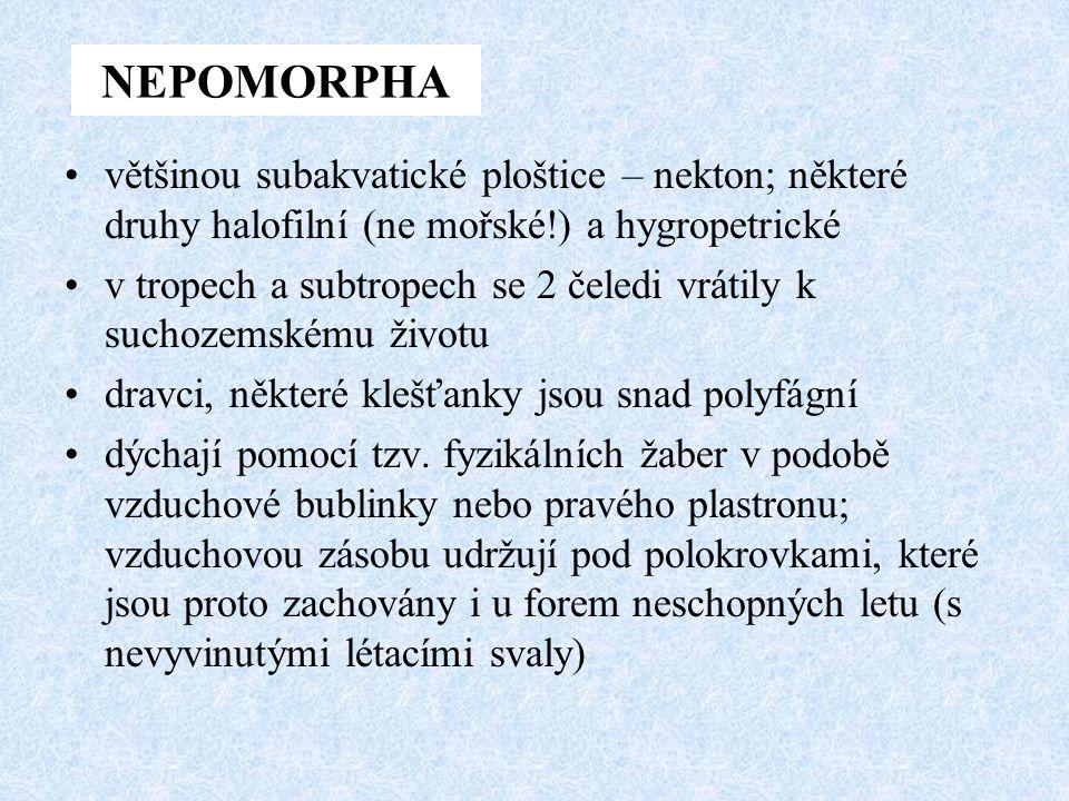 NEPOMORPHA většinou subakvatické ploštice – nekton; některé druhy halofilní (ne mořské!) a hygropetrické.