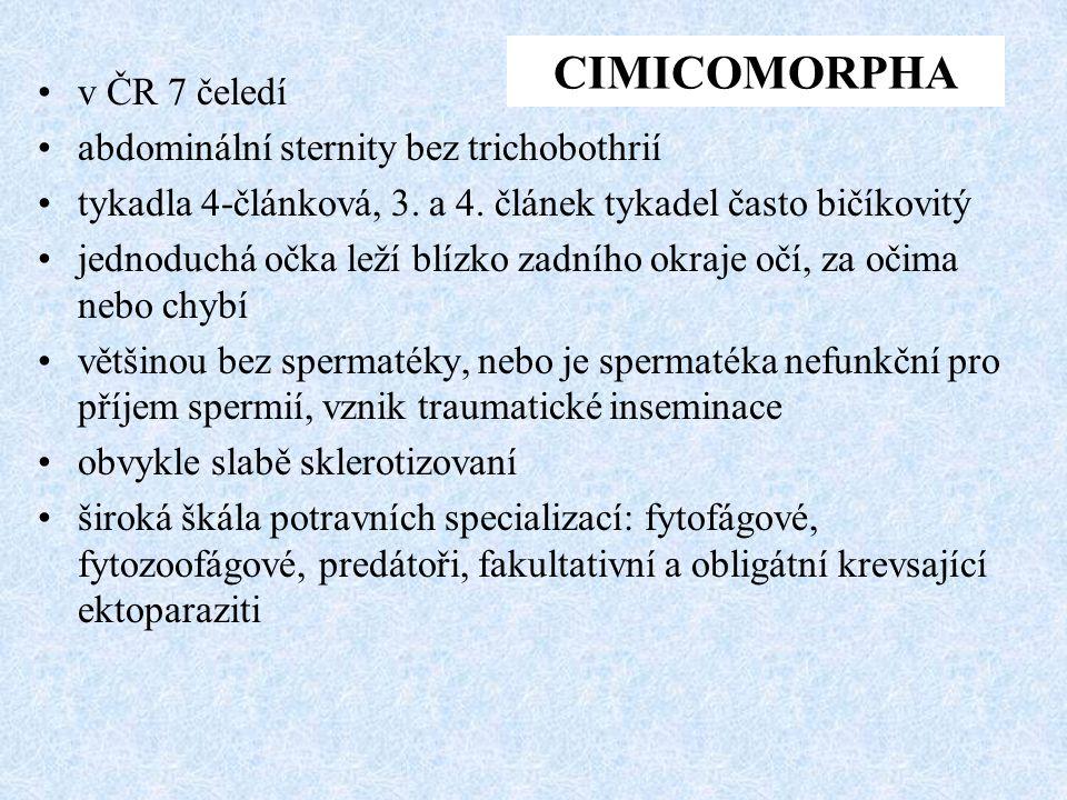 CIMICOMORPHA v ČR 7 čeledí abdominální sternity bez trichobothrií
