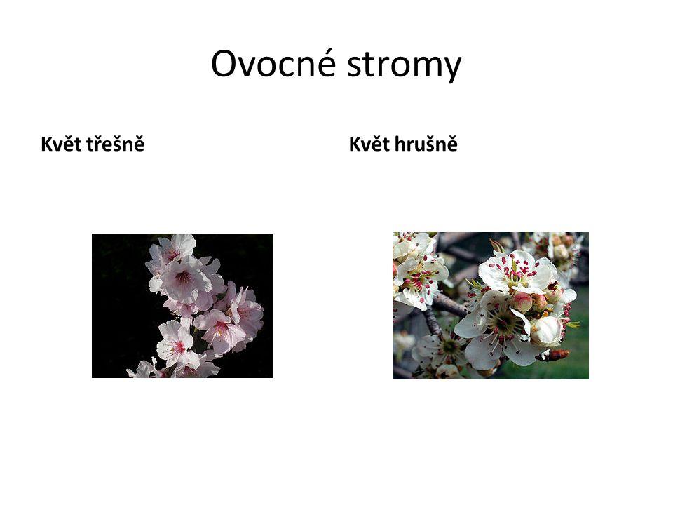 Ovocné stromy Květ třešně Květ hrušně