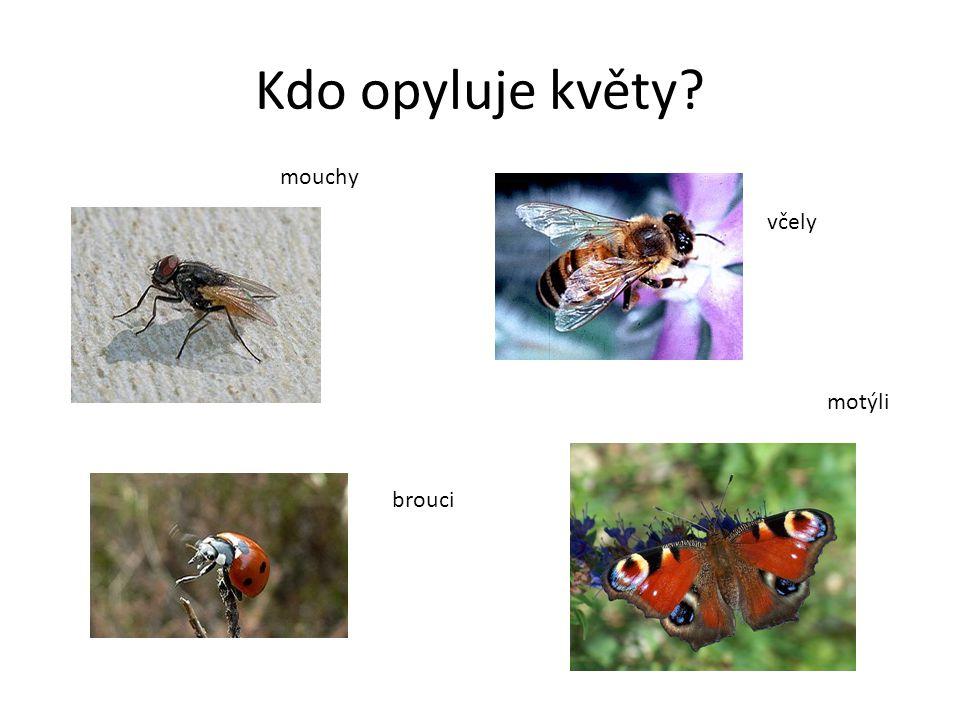 Kdo opyluje květy mouchy včely motýli brouci