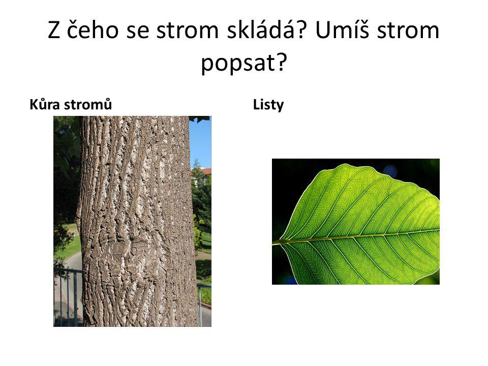 Z čeho se strom skládá Umíš strom popsat