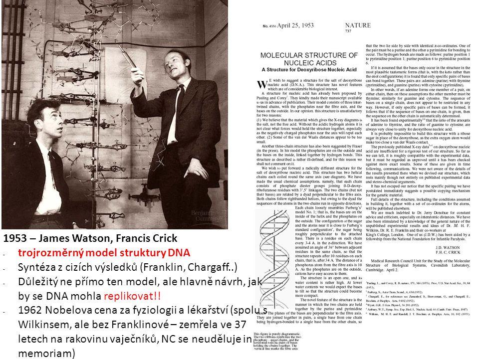 1414 1953 – James Watson, Francis Crick. trojrozměrný model struktury DNA. Syntéza z cizích výsledků (Franklin, Chargaff..)