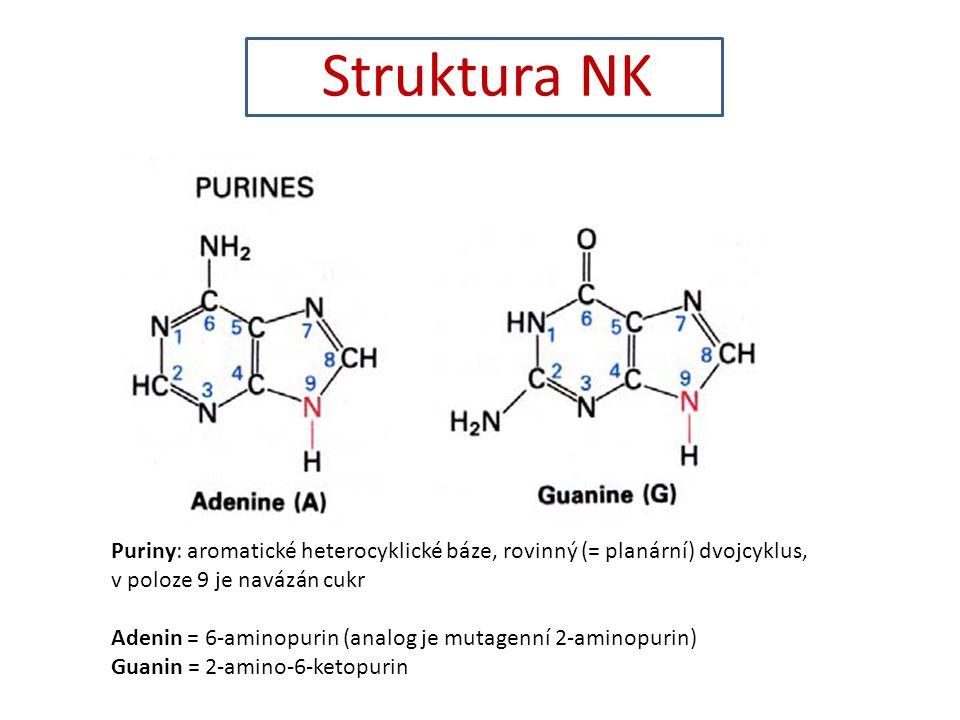 Struktura NK Puriny: aromatické heterocyklické báze, rovinný (= planární) dvojcyklus, v poloze 9 je navázán cukr.