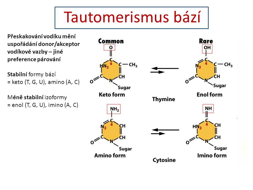 Tautomerismus bází Přeskakování vodíku mění uspořádání donor/akceptor vodíkové vazby – jiné preference párování.