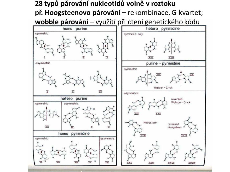 28 typů párování nukleotidů volně v roztoku