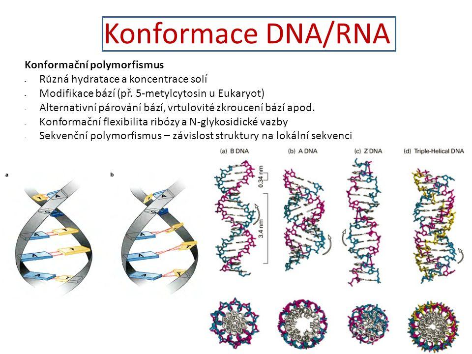 Konformace DNA/RNA 2828 Konformační polymorfismus