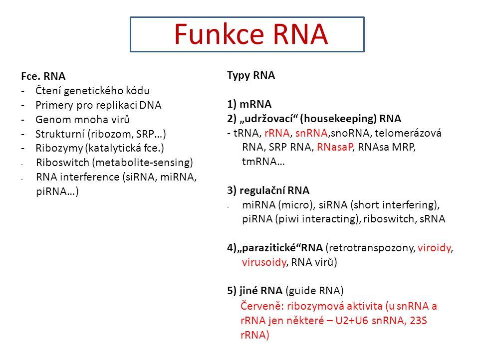 Funkce RNA Fce. RNA Typy RNA - Čtení genetického kódu