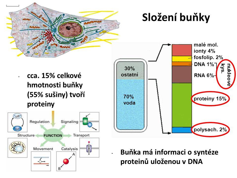 cca. 15% celkové hmotnosti buňky (55% sušiny) tvoří proteiny