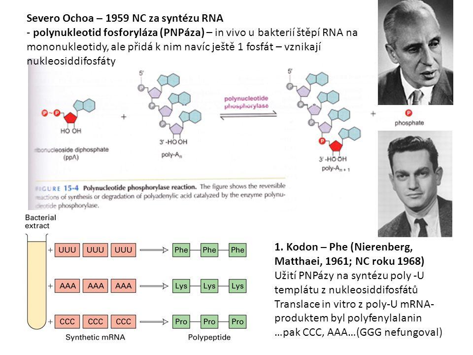 4141 Severo Ochoa – 1959 NC za syntézu RNA.