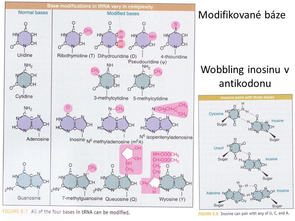 Wobbling inosinu v antikodonu