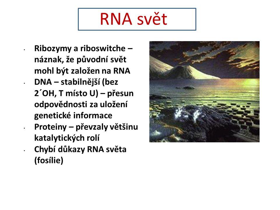 RNA svět Ribozymy a riboswitche – náznak, že původní svět mohl být založen na RNA.