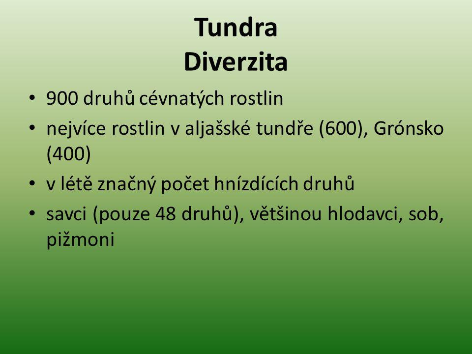 Tundra Diverzita 900 druhů cévnatých rostlin