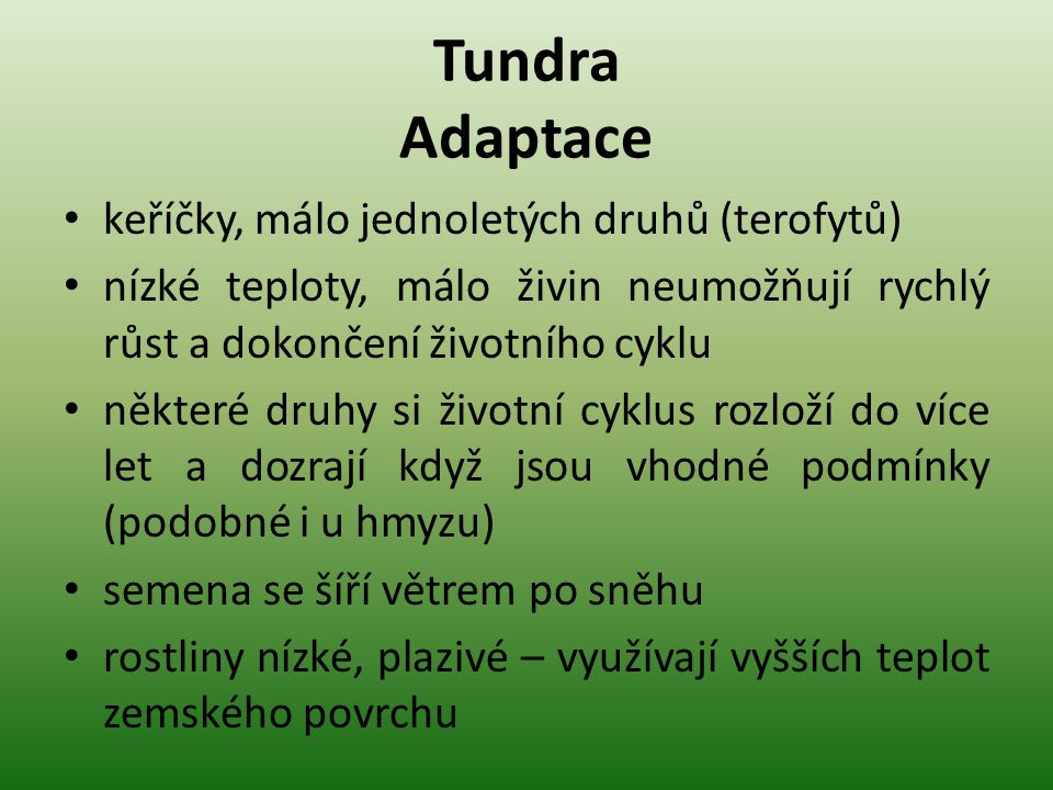 Tundra Adaptace keříčky, málo jednoletých druhů (terofytů)