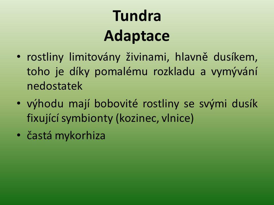 Tundra Adaptace rostliny limitovány živinami, hlavně dusíkem, toho je díky pomalému rozkladu a vymývání nedostatek.