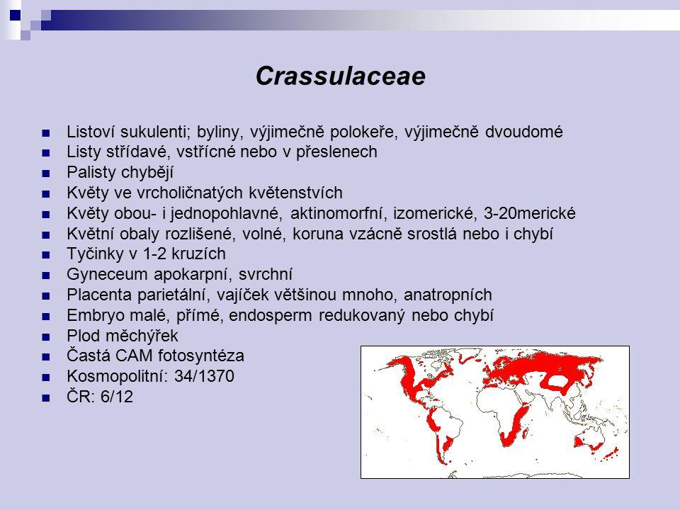 Crassulaceae Listoví sukulenti; byliny, výjimečně polokeře, výjimečně dvoudomé. Listy střídavé, vstřícné nebo v přeslenech.
