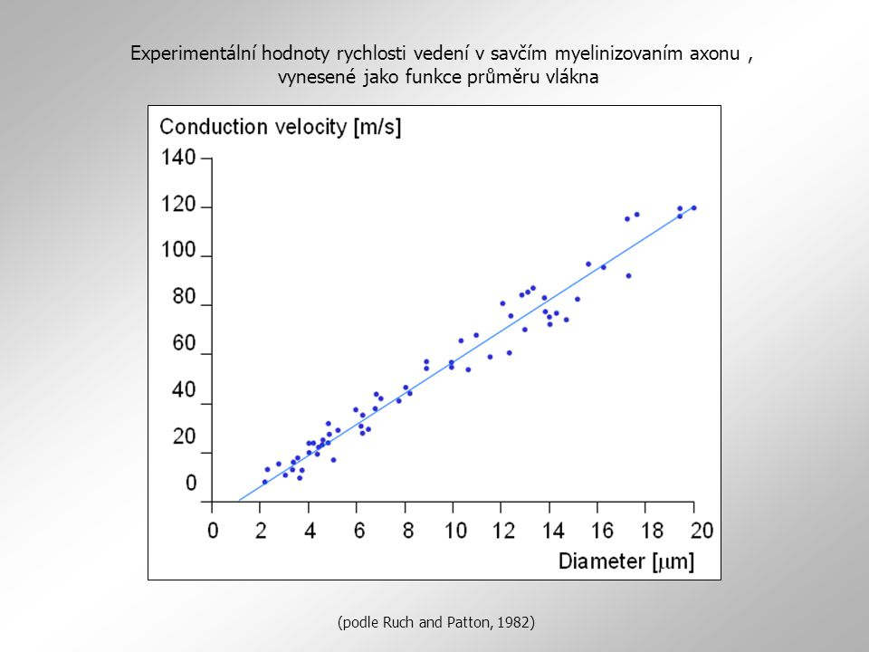 Experimentální hodnoty rychlosti vedení v savčím myelinizovaním axonu , vynesené jako funkce průměru vlákna