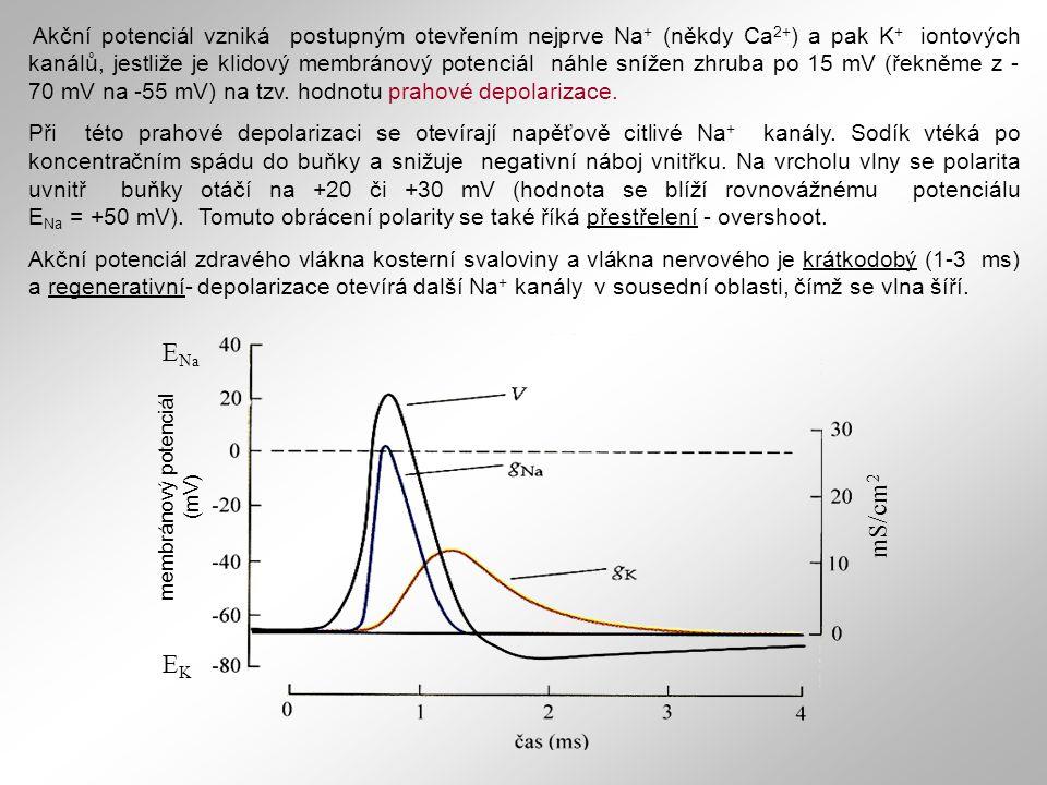 membránový potenciál (mV)