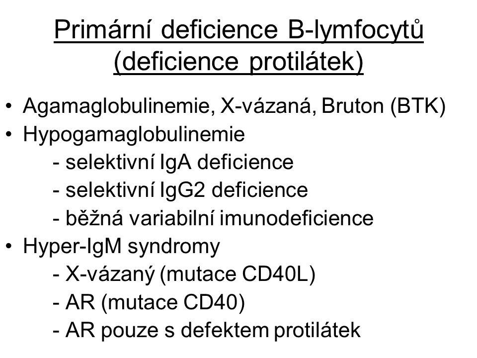 Primární deficience B-lymfocytů (deficience protilátek)