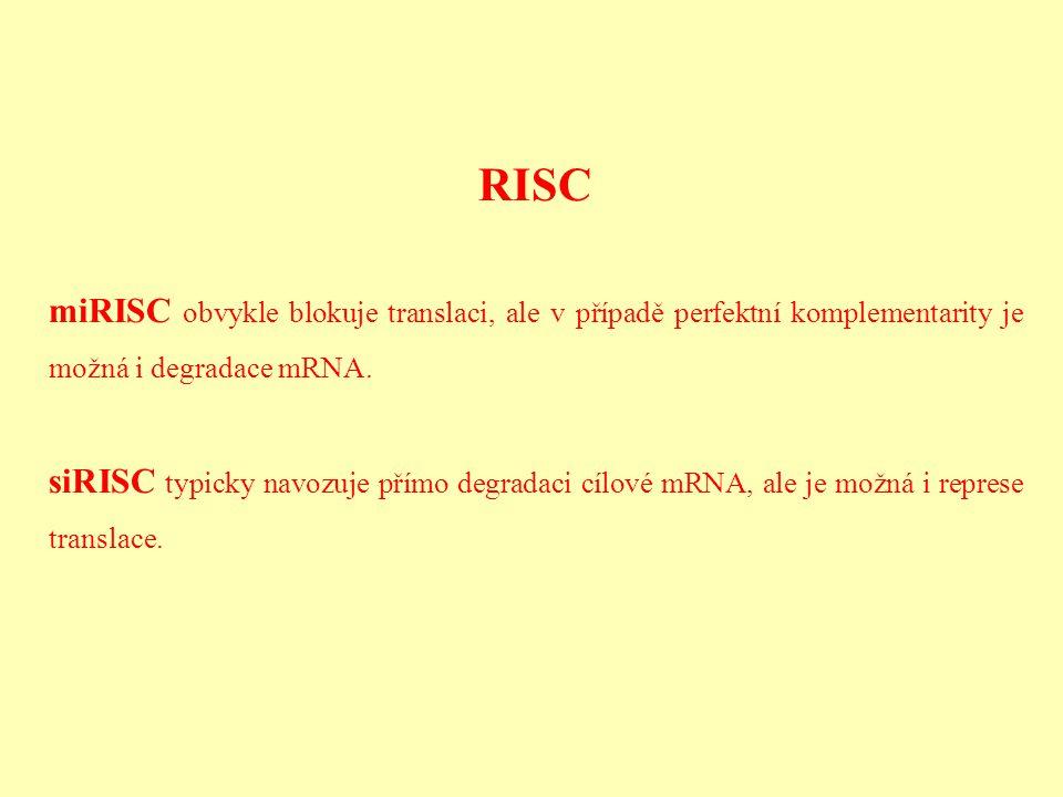 RISC miRISC obvykle blokuje translaci, ale v případě perfektní komplementarity je možná i degradace mRNA.