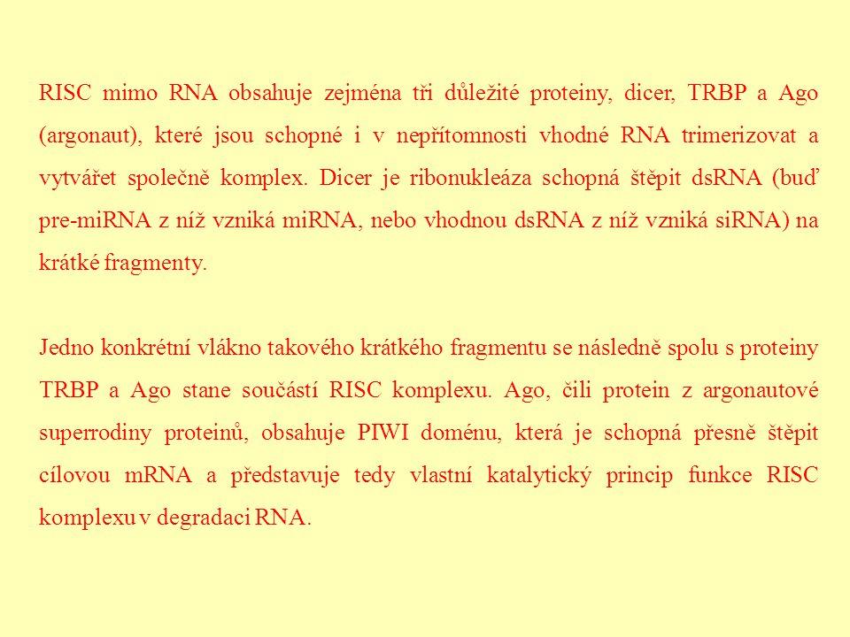 RISC mimo RNA obsahuje zejména tři důležité proteiny, dicer, TRBP a Ago (argonaut), které jsou schopné i v nepřítomnosti vhodné RNA trimerizovat a vytvářet společně komplex. Dicer je ribonukleáza schopná štěpit dsRNA (buď pre-miRNA z níž vzniká miRNA, nebo vhodnou dsRNA z níž vzniká siRNA) na krátké fragmenty.