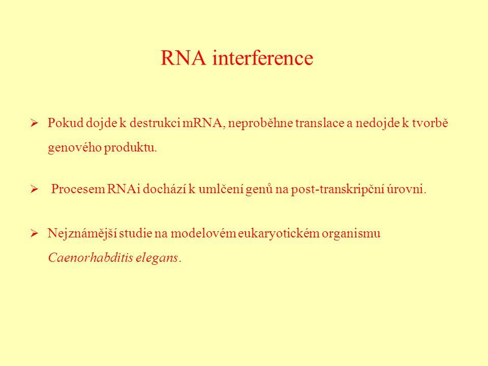RNA interference Pokud dojde k destrukci mRNA, neproběhne translace a nedojde k tvorbě genového produktu.