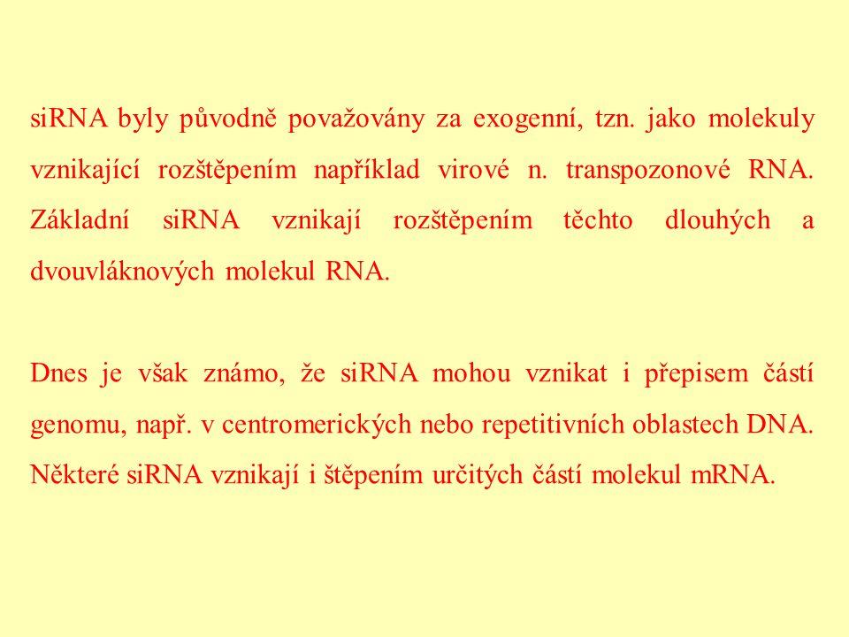 siRNA byly původně považovány za exogenní, tzn