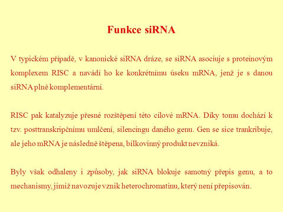 Funkce siRNA