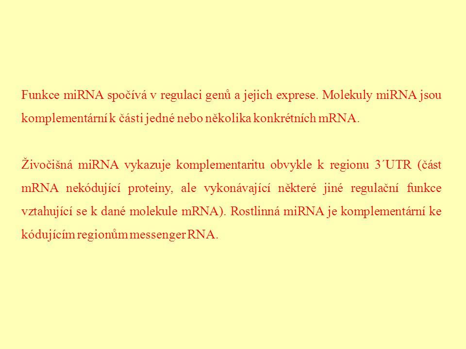Funkce miRNA spočívá v regulaci genů a jejich exprese
