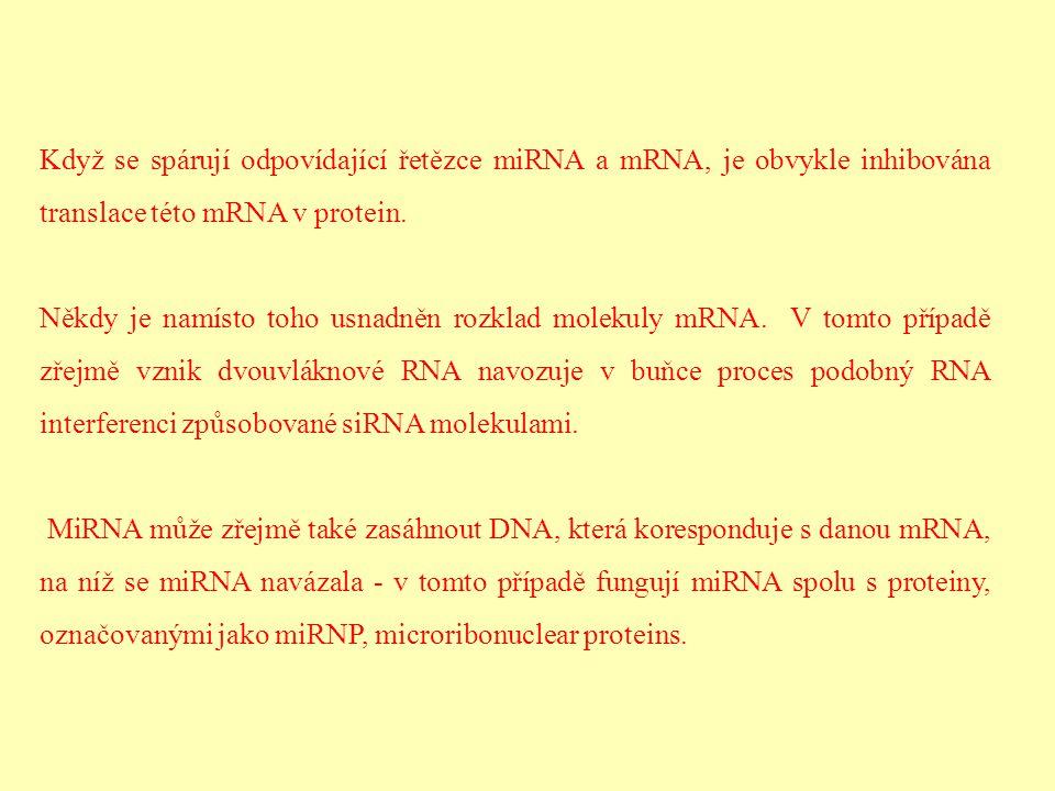 Když se spárují odpovídající řetězce miRNA a mRNA, je obvykle inhibována translace této mRNA v protein.