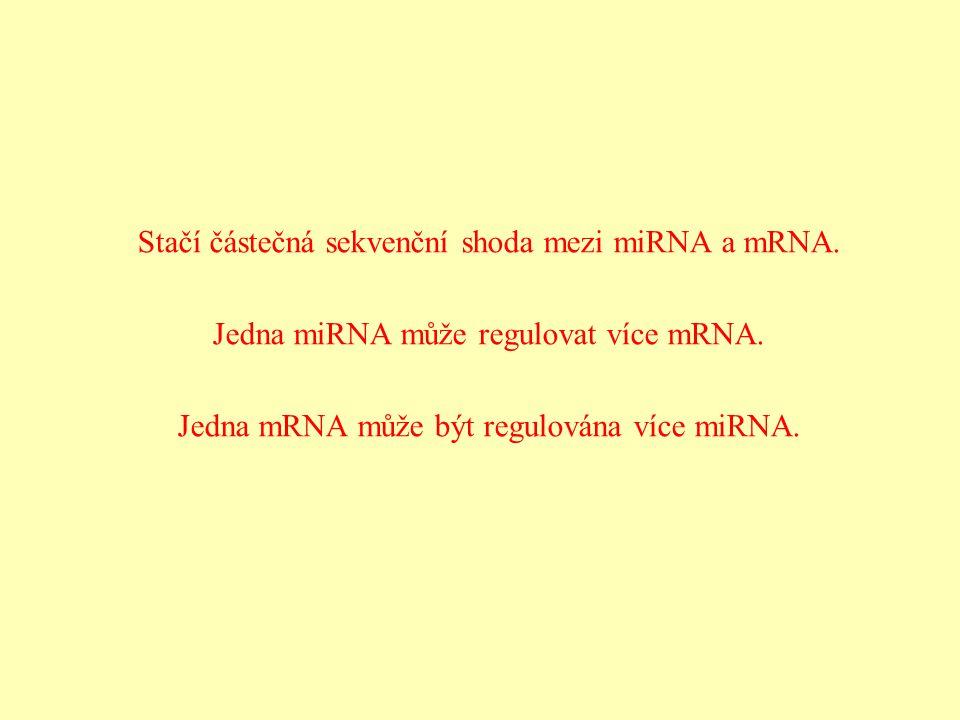 Stačí částečná sekvenční shoda mezi miRNA a mRNA.