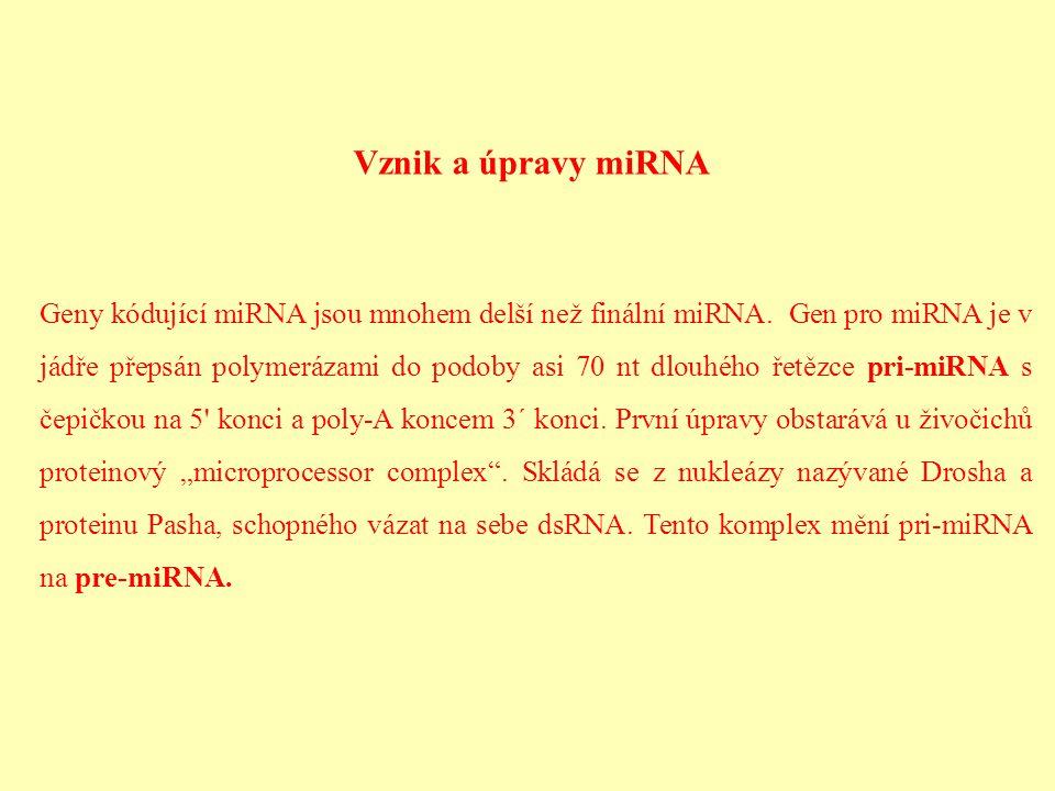 Vznik a úpravy miRNA