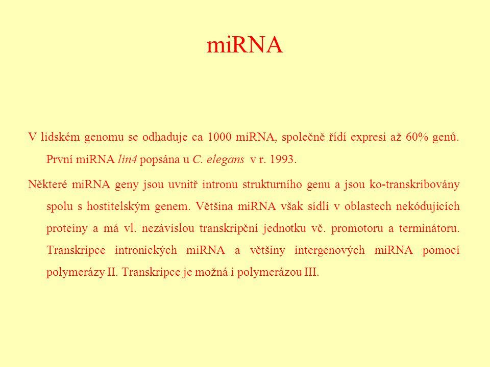 miRNA V lidském genomu se odhaduje ca 1000 miRNA, společně řídí expresi až 60% genů. První miRNA lin4 popsána u C. elegans v r. 1993.