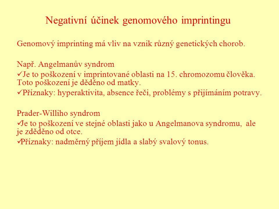 Negativní účinek genomového imprintingu