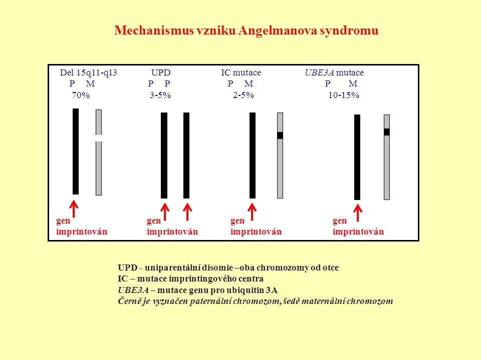 Mechanismus vzniku Angelmanova syndromu