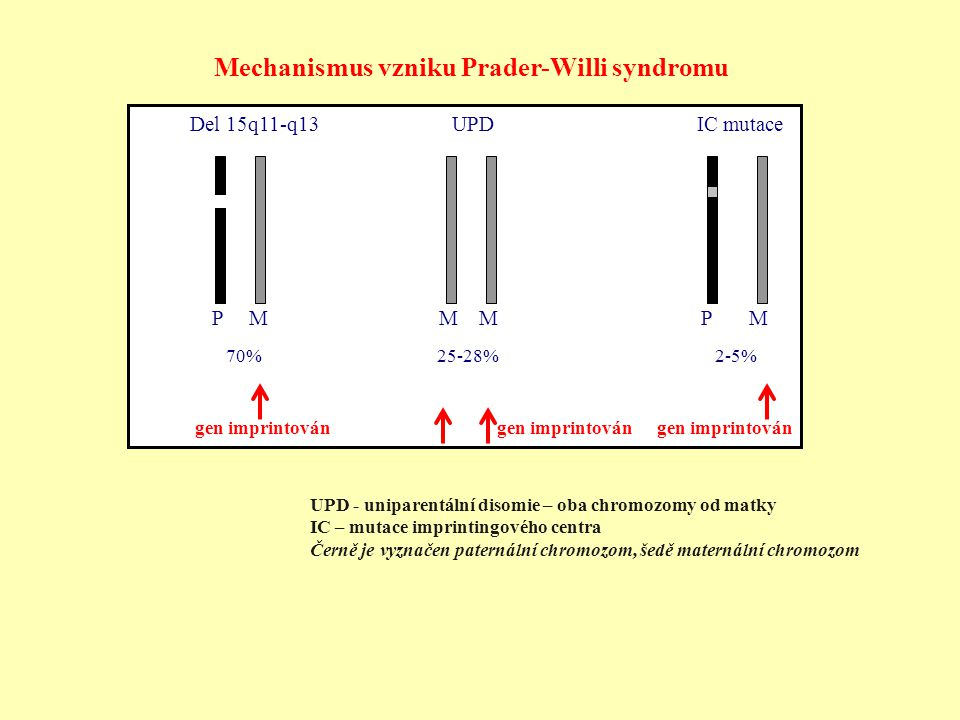Mechanismus vzniku Prader-Willi syndromu