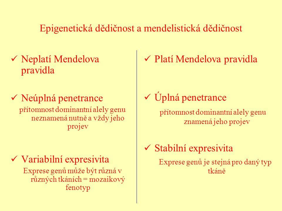 Epigenetická dědičnost a mendelistická dědičnost