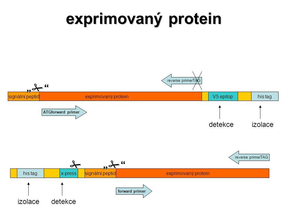 """exprimovaný protein """"  """" detekce izolace izolace detekce"""