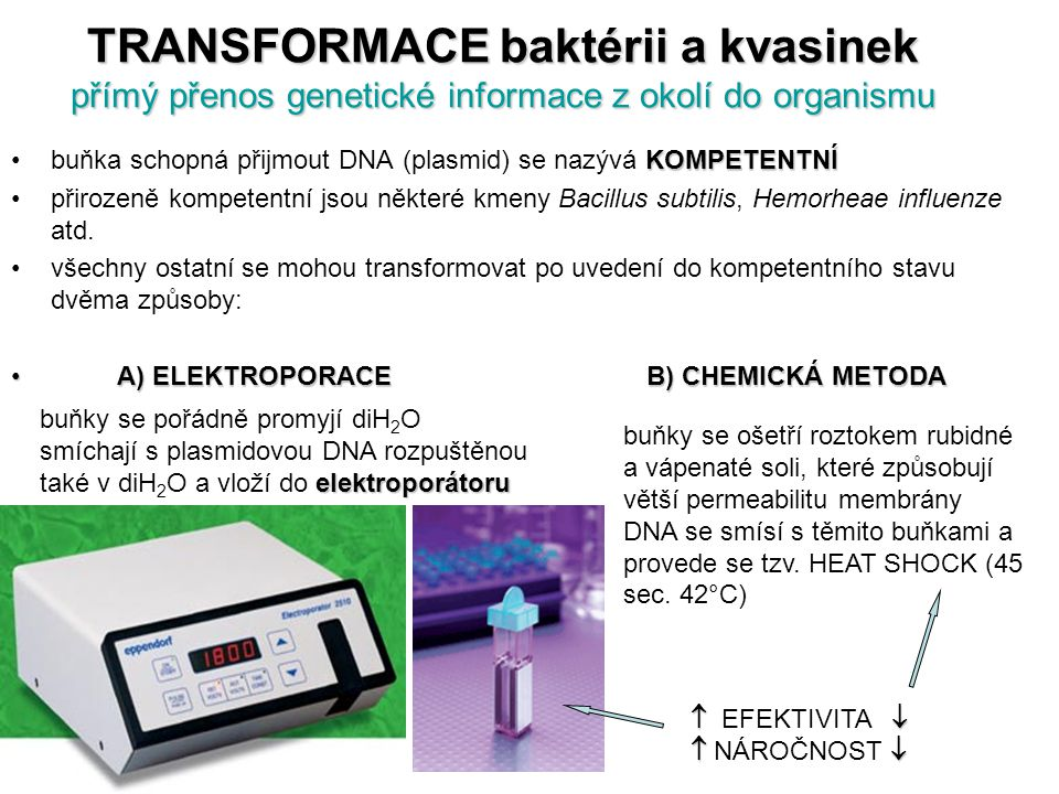 TRANSFORMACE baktérii a kvasinek přímý přenos genetické informace z okolí do organismu