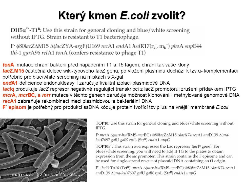 Který kmen E.coli zvolit