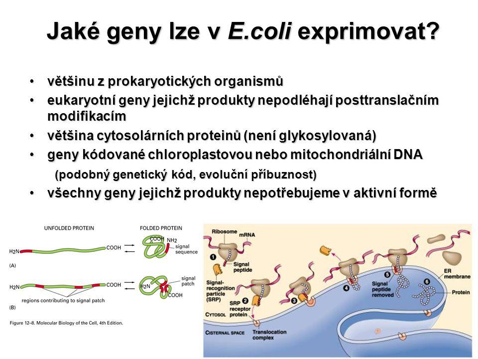 Jaké geny lze v E.coli exprimovat