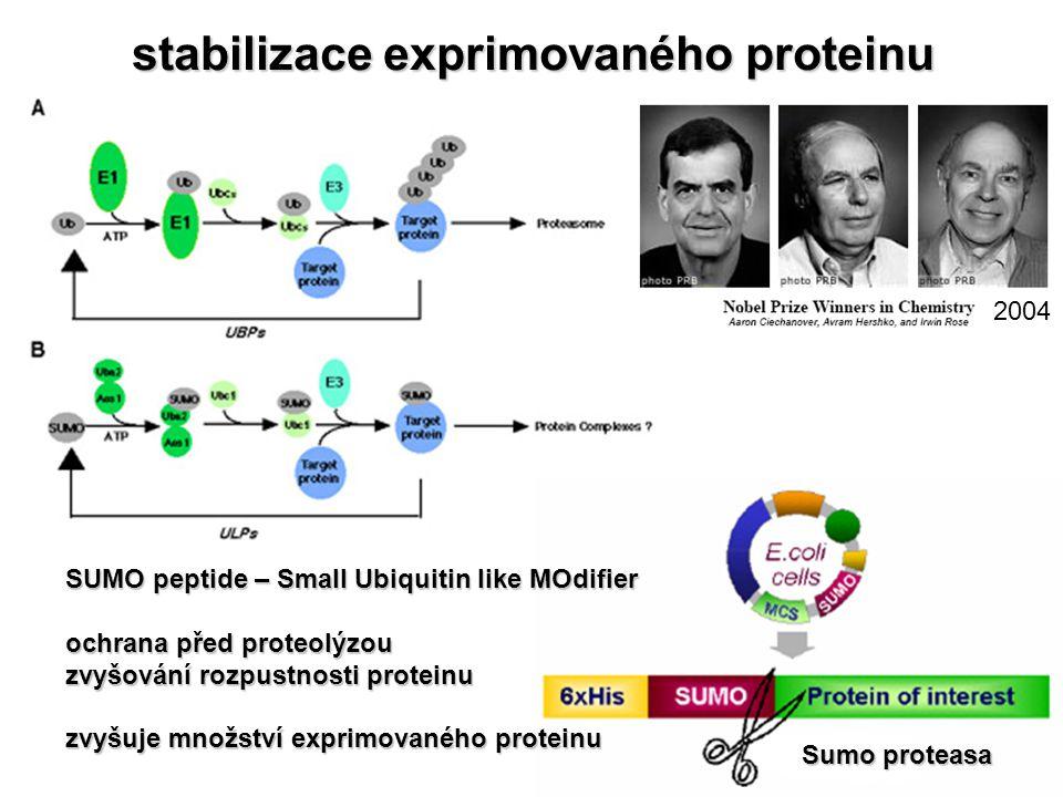 stabilizace exprimovaného proteinu