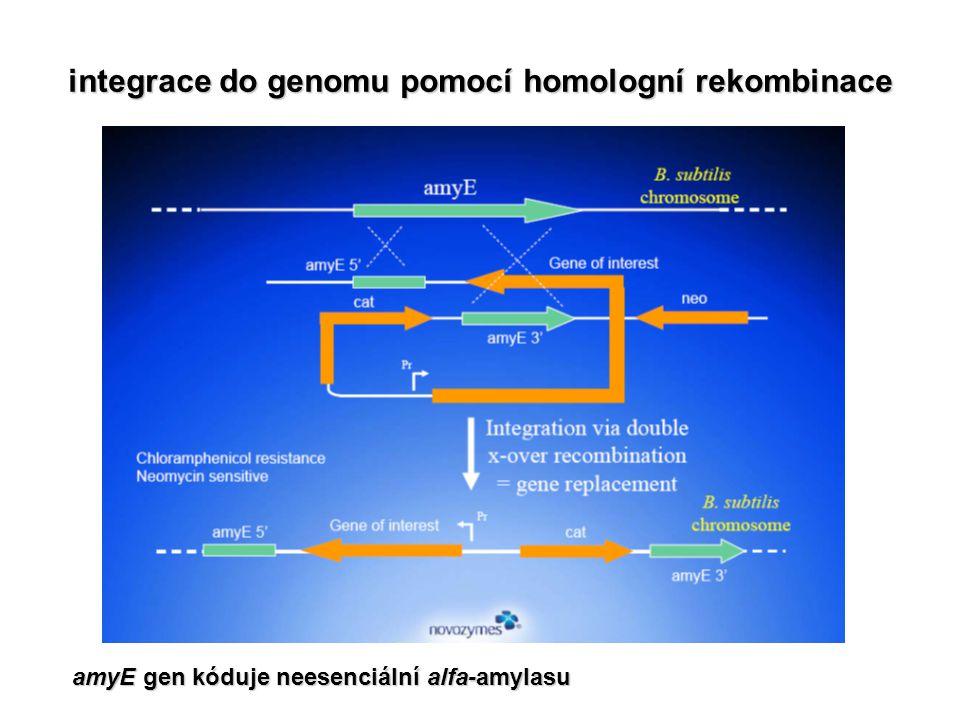 integrace do genomu pomocí homologní rekombinace