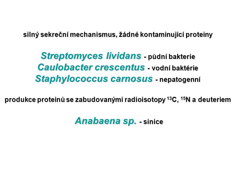 silný sekreční mechanismus, žádné kontaminující proteiny Streptomyces lividans - půdní bakterie Caulobacter crescentus - vodní baktérie Staphylococcus carnosus - nepatogenní produkce proteinů se zabudovanými radioisotopy 13C, 15N a deuteriem Anabaena sp.